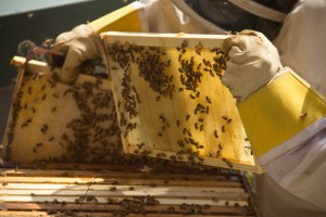 nov-bees-2